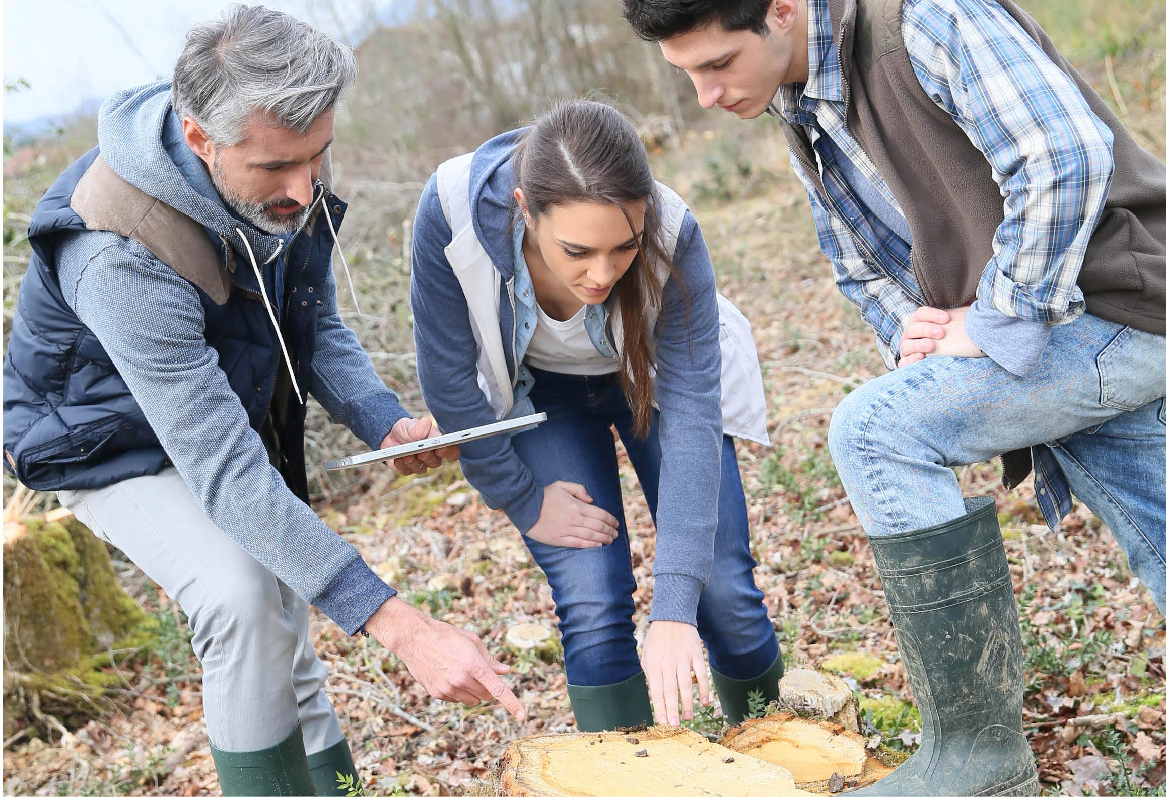 Tre personer gör en vetenskaplig undersökning av en trädstubbe