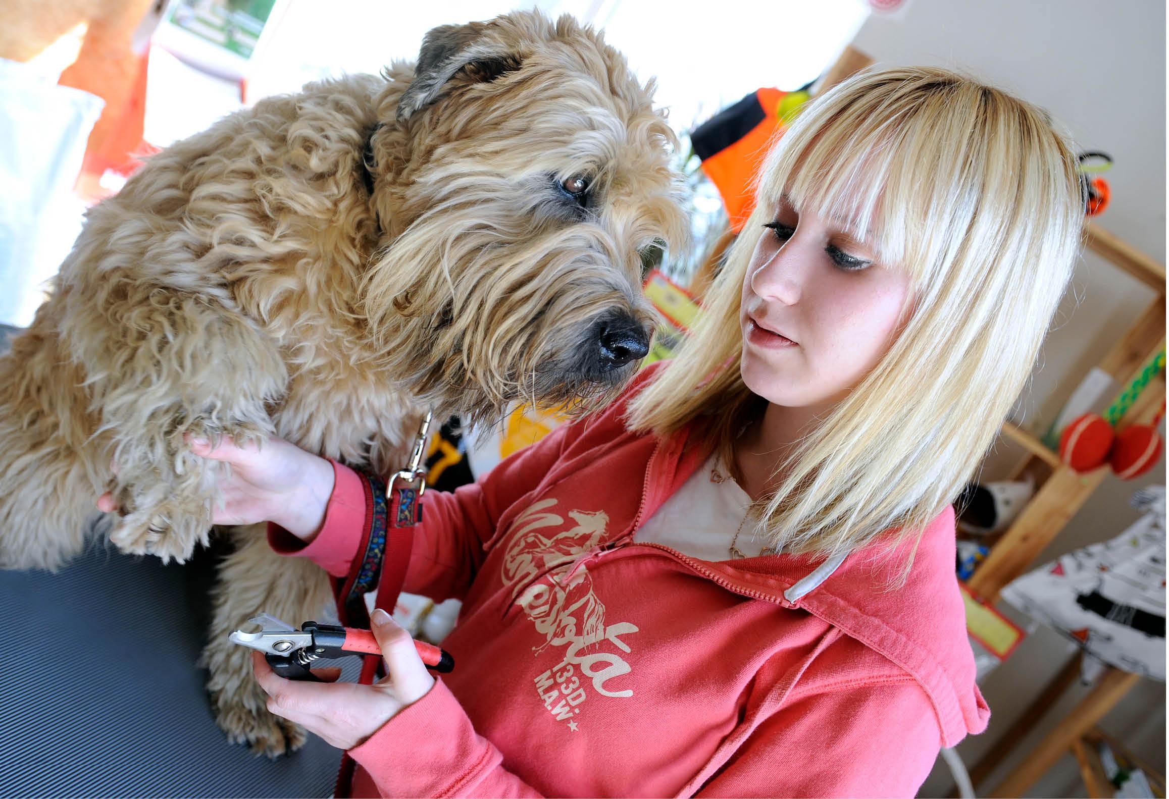 Hundskötare som klipper klorna på en hund